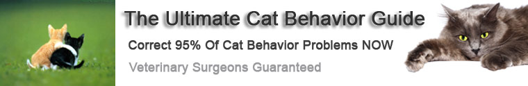 Purrfect Cat Behavior Header